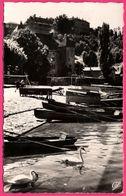 Cp Dentelée - Thonon Les Bains - Les Barques Au Port - Cygnes - Cygne - CAP - 1960 - Thonon-les-Bains