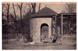 3308 - Paris 5e ( Le Jardin Des Plantes ) - Les Nandous - N°15 - Royer à Nancy - - Paris (05)