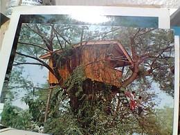 PHLIPPINE  FILIPPINE  A TREE  HOUSE ZAMBOANGA  CITY PASONANGA PARK  STAMP TIMBRE SELO 3,5 GX5768 - Filippine