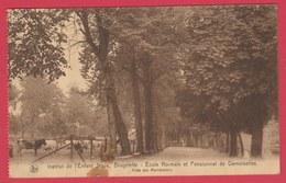 Brugelette - Ecole Normale Et Pensionnat De Demoiselles- Allée Des Marronniers - 1931 ( Voir Verso ) - Brugelette