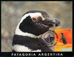 ARGENTINE. N°2077 De 1999 Sur Carte Maximum. Manchot. - Antarctic Wildlife