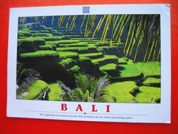 "BALI.Bali""s Legendary Rice Terraces Provide Vital Sustenace For The Island""s Fascinating Culture - Indonesia"