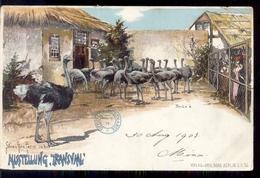 Zuid Afrika - Transvaal - Ausstellung Straußen Ben Farm Inder - 1903 - South Africa