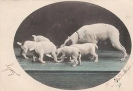 Repas En Famille!..---scan-- - Dogs