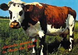 Vache Normande - Cows