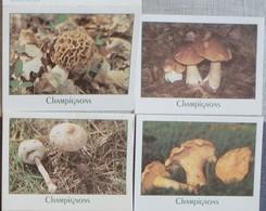 Petit Calendrier Poche Lot 4 Calendriers Champignons 2001 Coulemelle Cèpe Chanterelle Morille - Calendars