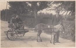 SAVIGNANO SUL RUBICONE (DI ROMAGNA)-ASINO CON CALESSE-BELLISSIMA CARTOLINA VERA FOTOGRAFIA-VIAGGIATA IL 17-9-1926 - Forli