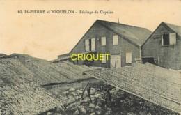 St Pierre Et Miquelon, Séchage Du Capelan, Belle Carte Pas Courante - Saint-Pierre-et-Miquelon