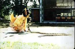 Myanmar (Birmanie) : The World Famous Snake Dance Of The Rangoon Zoo - Myanmar (Burma)