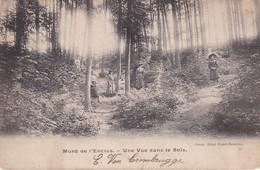 Mont De L Enclus Une Vue Dans Le Bois - Mont-de-l'Enclus