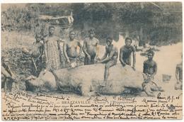 CONGO, BRAZZAVILLE - Chasse à L'Hippopotame - Annuaire Colonial - Brazzaville