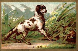 Chien - Chromos