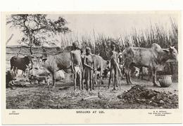 SOUDAN, Ethnique - Shulluks At Lul - G.N. Morhig, Khartoum - Sudan
