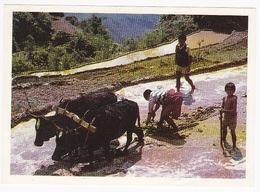 Image POULAIN - N° 52 ; Dans Les Cultures En Terrasse, Au Népal - Chocolat
