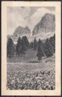 Panorama Montano Cecami N. 332 - Da Identificare
