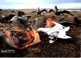 TAAF. N°116 De 1986 Sur Carte. Pétrel Géant. - Antarctic Wildlife