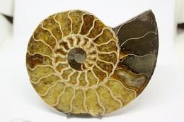 Fossile Di Ammonite - Metà Di Fossile Di Conchiglia - Provenienza Madagascar Peso 230gr - Fossiles