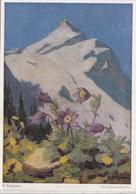 Erich Stegmann, Kuchenschelle, Unused Postcard [22249] - Paintings