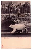 3325 - Paris 5e - Jardin Des Plantes - L'Ours Blanc - - Distrito: 05