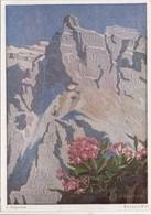 Erich Stegmann, Bergprimel, Unused Postcard [22261] - Paintings