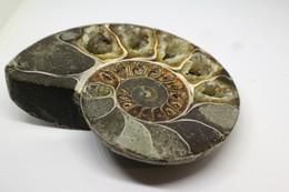 Fossile Di Ammonite - Metà Di Fossile Di Conchiglia - Provenienza Madagascar Peso 371 Gr - Fossiles