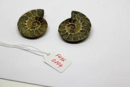 Fossile Di Ammonite  Naturale - Provenienza Madagascar Peso 25,20 Gr - Fossili
