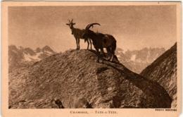 4OP 442 CPA - CHAMONIX - TETE A TETE - Chamonix-Mont-Blanc