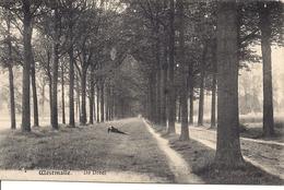WESTMALLE DE DREVE - Malle
