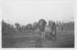 ¤¤   -  IRAN  -   Carte-Photo D'une Caravane De Chameaux En PERSE   -  Chamelier   -  ¤¤ - Iran