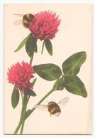 Fleurs Roses Et Abeilles - Fleurs