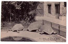 3367 - Paris 5e - Au Jardin Des Plantes - Les Tortues Eléphantines - N°31 - Royer à Nancy - - Arrondissement: 05
