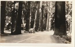 "Redwood Highway, California State Redwood Park, 1935 6"" X 3.7"" 15 Cm X 9.4 Cm - Places"
