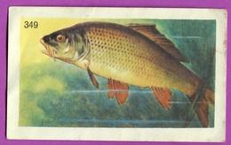 """Image Histoire Naturelle """" ENTREMETS FRANCORUSSE """" N° 349 Poisson LA CARPE SAUVAGE Pour L'Album N° 3 - Documentos Antiguos"""