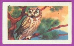 """Image Histoire Naturelle """" ENTREMETS FRANCORUSSE """" N° 395 Chouette Hibou CHOUETTE DE TELGMALM NYCTALE Pour L'Album N° 4 - Alte Papiere"""