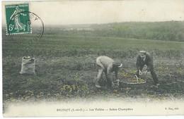 BRUNOY  RECOLTE POMMES DE TERRES  METIER CULTURE AGRICULTURE        SUPERBE CARTE ANIMEE - Francia