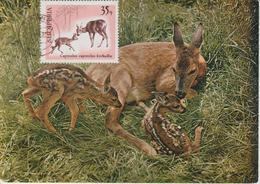 Albanie Carte Maximum Animaux 1967 Chevreuils 997 - Albanie