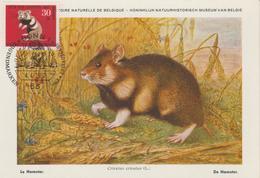 Allemagne Carte Maximum 1967 Hamster 389 - Cartas Máxima