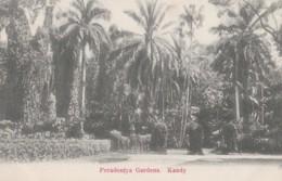 AO51 Ceylon Postcard, Peradeniya Gardens, Kandy - Undivided Back - Sri Lanka (Ceylon)