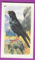 """Image Histoire Naturelle """" ENTREMETS FRANCORUSSE """" N° 427 Oiseau Passereau LE CHOCARD  Pour L'Album N° 4 - Vecchi Documenti"""