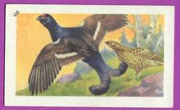 """Image Histoire Naturelle """" ENTREMETS FRANCORUSSE """" N° 432 Oiseau LE TETRA LYRE  Pour L'Album N° 4 - Vecchi Documenti"""