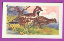 """Image Histoire Naturelle """" ENTREMETS FRANCORUSSE """" N° 433 Oiseau LA GÉLINOTTE - POULE DES BOIS  Pour L'Album N° 4 - Vecchi Documenti"""