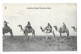 ADEN  -   YEMEN  - Arabian Camel Caravan - Aden   -  L 1 - Yémen