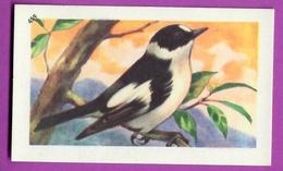 """Image Histoire Naturelle """" ENTREMETS FRANCORUSSE """" N° 459 Oiseau LE GOBE MOUCHE GRIS Pour L'Album N° 4 - Alte Papiere"""