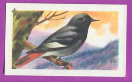 """Image Histoire Naturelle """" ENTREMETS FRANCORUSSE """" N° 460 Oiseau LE ROUGE QUEUE NOIR Pour L'Album N° 4 - Alte Papiere"""