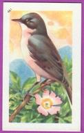 """Image Histoire Naturelle """" ENTREMETS FRANCORUSSE """" N° 461 Oiseau LA FAUVETTE BABILLARDE Pour L'Album N° 4 - Vecchi Documenti"""