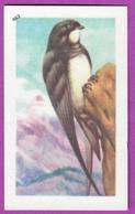 """Image Histoire Naturelle """" ENTREMETS FRANCORUSSE """" N° 462 Oiseau LE MARTINET ALPIN Pour L'Album N° 4 - Vecchi Documenti"""