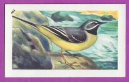"""Image Histoire Naturelle """" ENTREMETS FRANCORUSSE """" N° 464 Oiseau LA BERGERONNETTE ALPESTRE Pour L'Album N° 4 - Vecchi Documenti"""