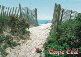 Massachusetts Cape Cod Beach Walk 1998 - Cape Cod