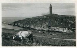 ESPAGNE(LA CORUNA) PHARE(VACHE) - La Coruña