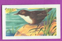 """Image Histoire Naturelle """" ENTREMETS FRANCORUSSE """" N° 465 Oiseau LE CINGLE PLONGEUR Pour L'Album N° 4 - Alte Papiere"""